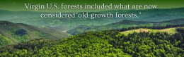 US Old Growth Forests